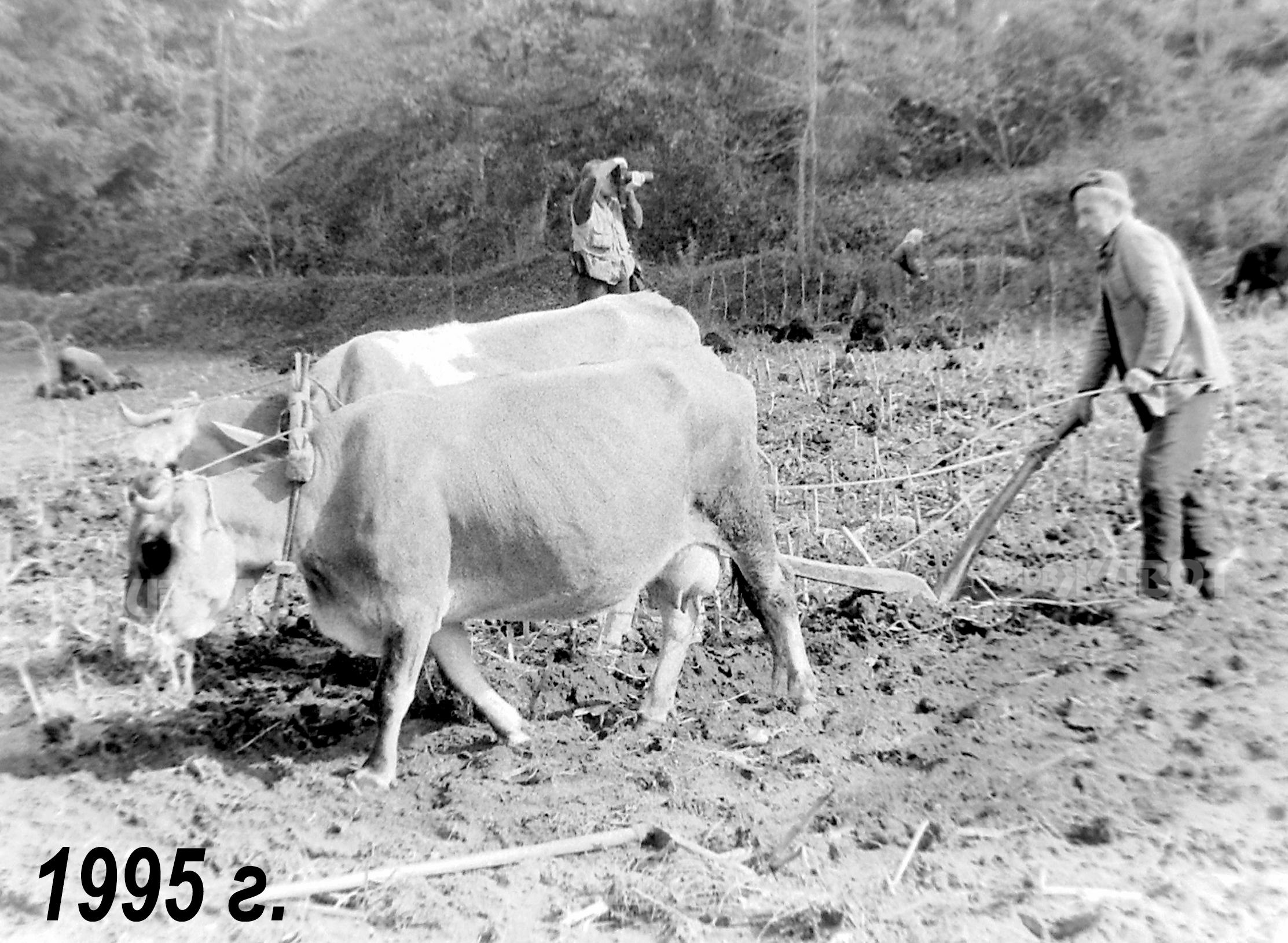 ⬆⬆ Завръщане към дървеното рало след ликвидиране на стопанствата ⬆⬆